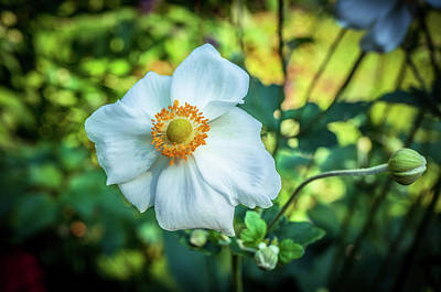 Photograph - Beautiful White Flower 4 by Lilia D