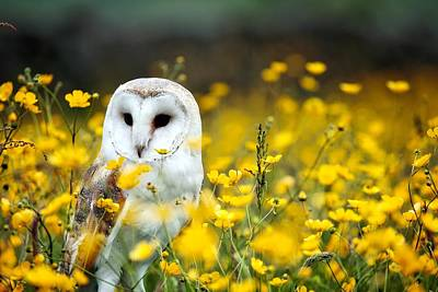 Beautiful White Owl In Wildflowers Art Print by Andy Chilton