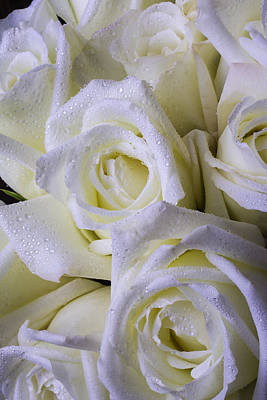 Wet Rose Photograph - Beautiful White Roses by Garry Gay