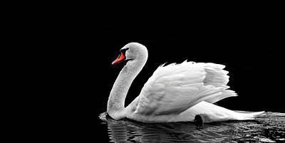Photograph - Beautiful White Swan On The Lake Wall Art by Wall Art Prints