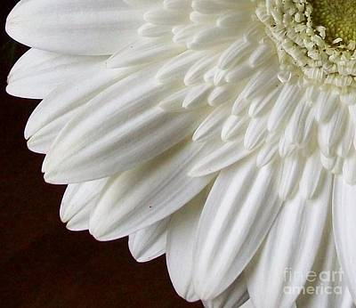 Beautiful Whiteness Art Print by Marsha Heiken