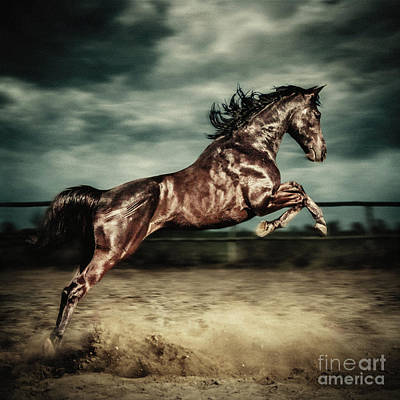 Photograph - Beautiful Wild Stallion Jumping In Dust Equestrian Photography On The Stormy by Dimitar Hristov