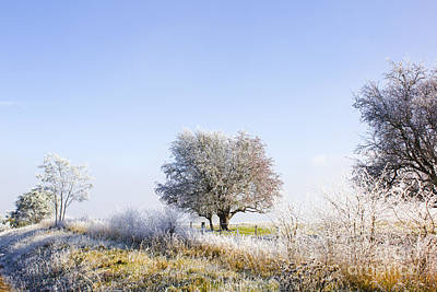 Pasture Scenes Photograph - Beautiful Winter Background With Snow Tipped Trees by Jorgo Photography - Wall Art Gallery