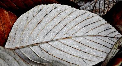 Photograph - Beautiful Winter Leaf by Werner Lehmann