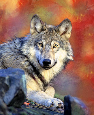Photograph - Beautiful Wolf Art by Georgiana Romanovna