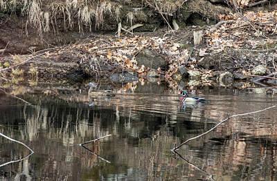 Photograph - Beautiful Wood Ducks  by Betty Pauwels