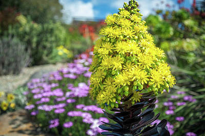 Photograph - Beautiful Yellow Flowers On A Garden Background by Daniela Constantinescu