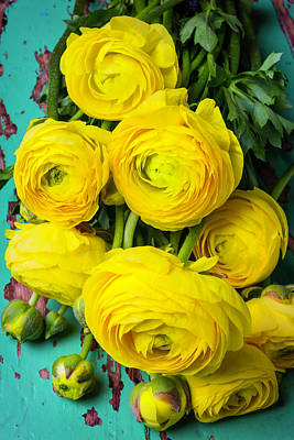 Chipping Paint Photograph - Beautiful Yellow Ranunculus by Garry Gay