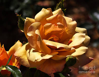 Beautiful Yellow Rose Belle Epoque Art Print by Louise Heusinkveld