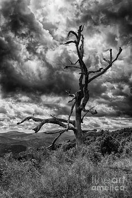 Photograph - Beautifully Dead In Black And White by David Cutts