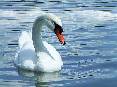 Swan Mixed Media - Beautifully Mute Swan by Georgiana Romanovna