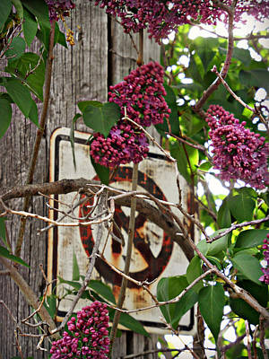 Photograph - Beautifully Rustic by Cyryn Fyrcyd