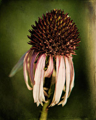 Photograph - Beautifully Wilted by Lana Trussell