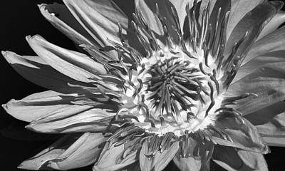Photograph - Beautify Of A Water Lily by Bruce Bley