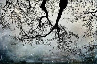 Photograph - Beauty Above by Randi Grace Nilsberg