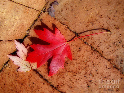 Photograph - Beauty Along The Path by Sue Melvin