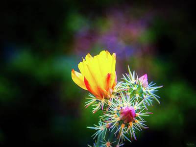 Photograph - Beauty Among The Thorns by Rick Furmanek