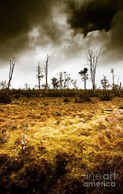 Arid Wall Art - Photograph - Beauty And Barren Bushland by Jorgo Photography - Wall Art Gallery