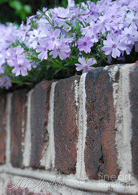 Photograph - Beauty And Bricks by Linda Mesibov
