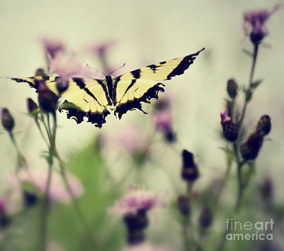Photograph - Beauty And Grace  by Kerri Farley