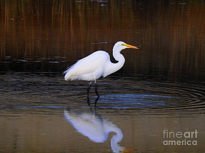 Photograph - Beauty And Grace by Scott Cameron