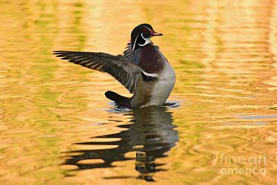Photograph - Wood Duck Sunset  by John F Tsumas