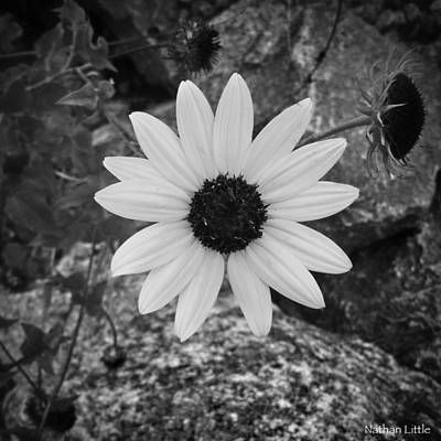 Photograph - Beauty And Stone Bw by Nathan Little
