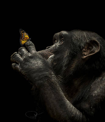 Chimpanzee Photograph - Beauty And The Beast by Paul Neville