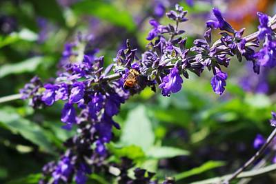 Photograph - Beauty And The Bee by Michiale Schneider
