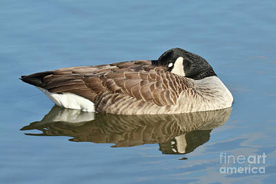 Photograph - Beauty At Rest by Anita Oakley