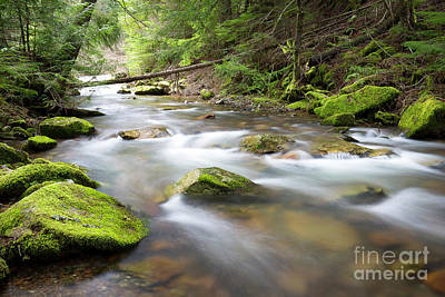 Photograph - Beauty Creek Spring by Idaho Scenic Images Linda Lantzy