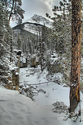 Photograph - Beauty Creek Winter Portrait by Adam Jewell