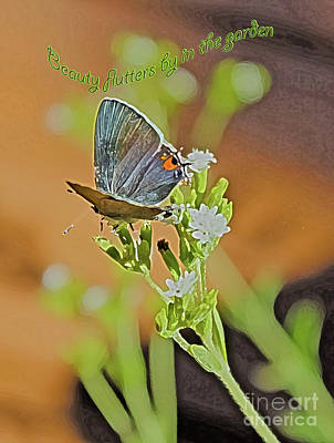 Photograph - Beauty Flutters By by Barbara Dean