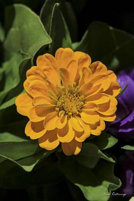 Genus Photograph - Beauty From The Ground Zinnia Flower Art by Reid Callaway