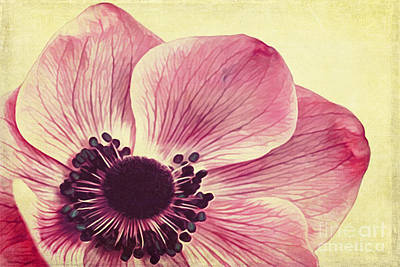 Beauty II Art Print by Angela Doelling AD DESIGN Photo and PhotoArt