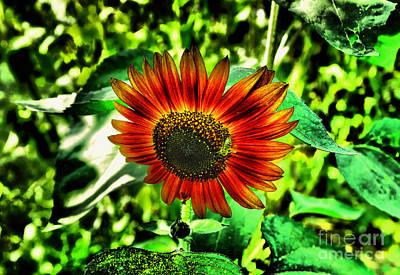 Photograph - Beauty In A Garden by Jeff Swan