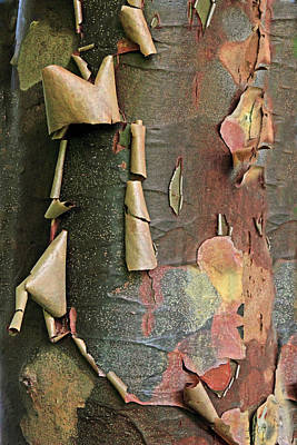 Photograph - Beauty In Bark by Jessica Jenney