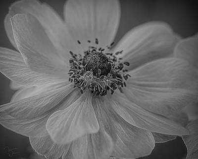 Photograph - Beauty In Black And White by Teresa Wilson