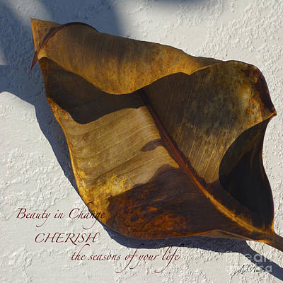 Photograph - Beauty In Change, Autumn Leaf by Sueann Hack