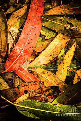 Photograph - Beauty In Colourful Fall by Jorgo Photography - Wall Art Gallery