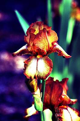 Photograph - Beauty In Copper by Linda Cox