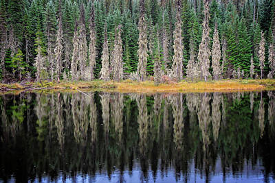 Photograph - Beauty In Idaho Bog by L J Oakes