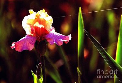 Photograph - Beauty In Lavender And Gold by Linda Cox