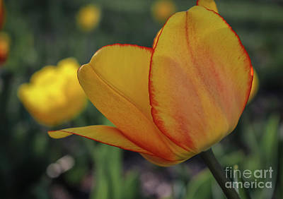 Photograph - Beauty In My Garden by Claudia M Photography
