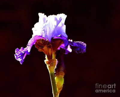 Photograph - Beauty In Purple by Linda Cox