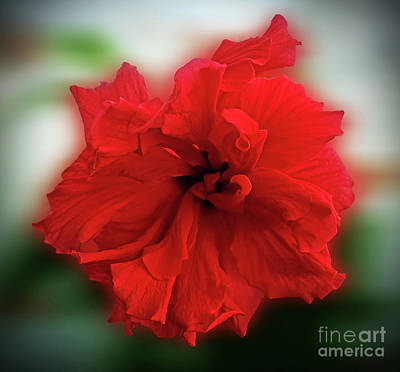 Digital Art - Beauty In Red by Jasna Dragun
