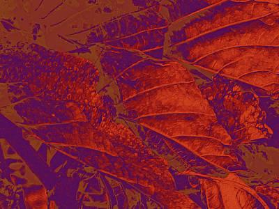 Mixed Media - Beauty In Red by Lynda Lehmann