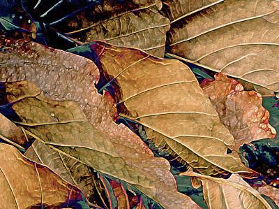 Mixed Media - Beauty In Sepia by Lynda Lehmann