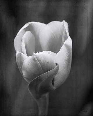 Photograph - Beauty In Simplicity - Black And White Art by Jordan Blackstone