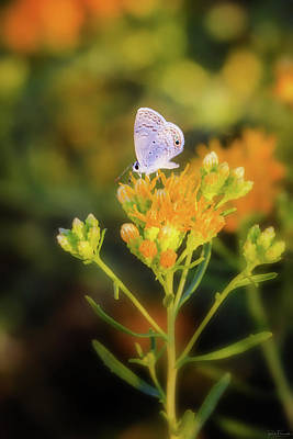 Photograph - Beauty In Small Things by Rick Furmanek